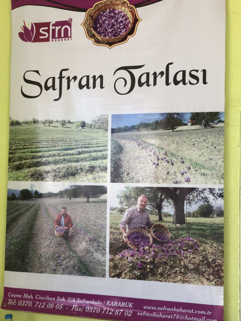 Safranbolu ve Amasra Safran Yetiştirmek