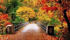 Sonbahar ve fotoğraf Çekimi