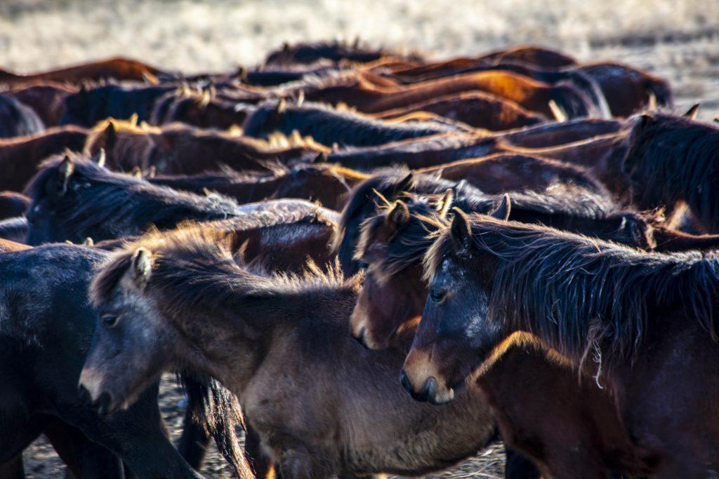 Yılkı'nın Atları Öğrekler