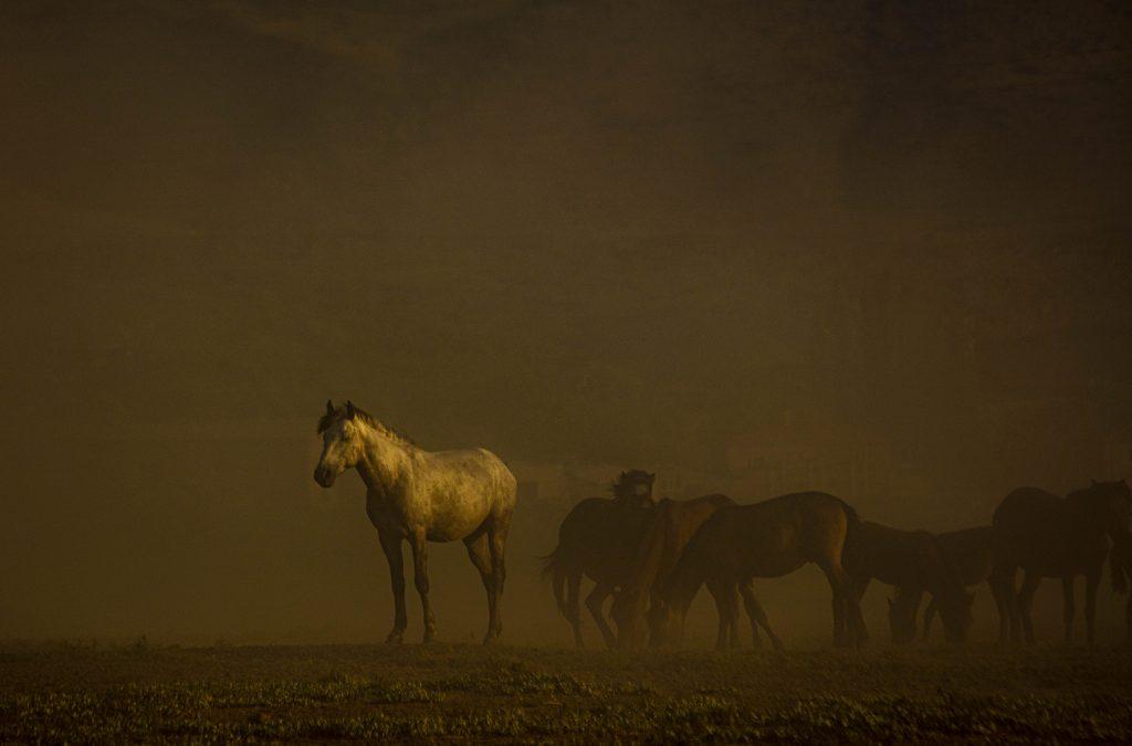 Yılkı Atları ve Özgürlük