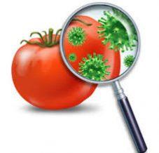 Yoksulluk ve Gıda Güvenliğinin Önemi