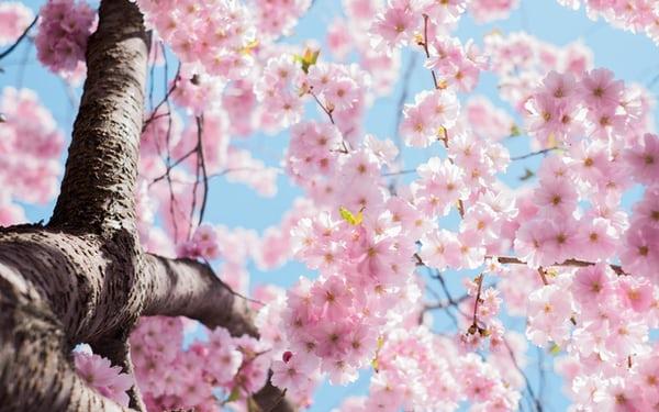 Kocakarı soğukları ve İlkbahar mevsimi