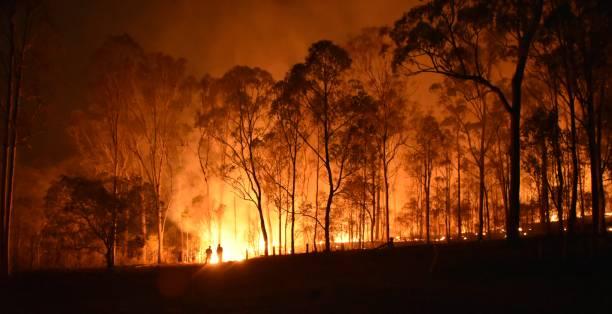 Orman yangınları