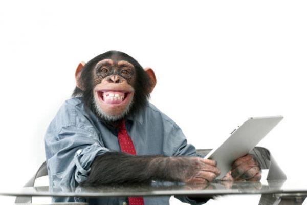 Monkey Business ve Kripto para borsası
