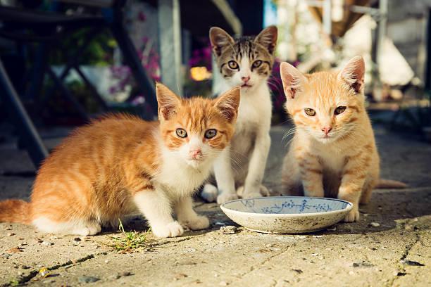 Pandemide sokak hayvanları