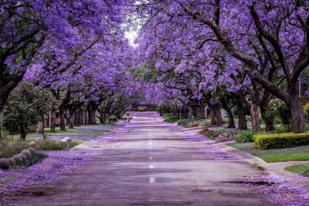İlkbaharda ağaçlar çiçek açar ve doğa canlanır