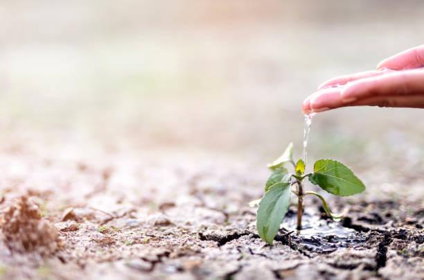 Çevre koruma haftası ve toprağımız