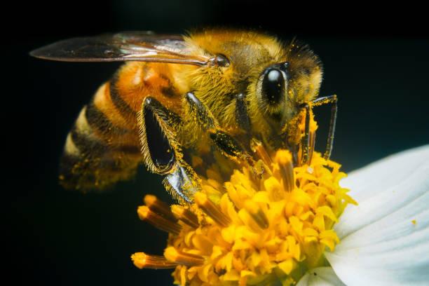 Arılar Neden Önemlidir