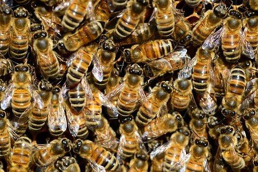 Arılar ve bal hakkında