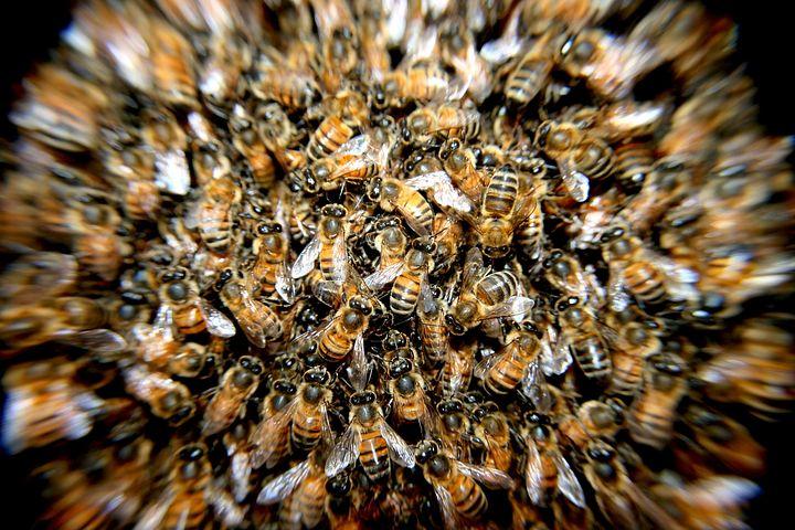Arıların Bal üretim süreci