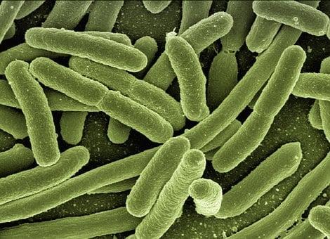 Bağışıklık sistemimiz ve vücudumuzu koruması