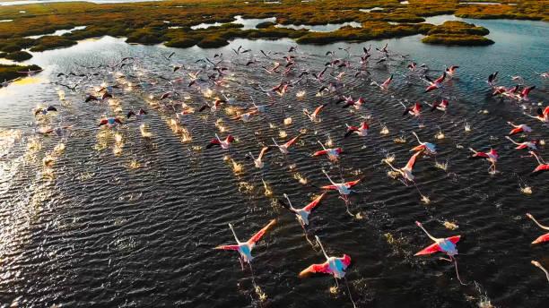 Flamingolar ve Göç yolları